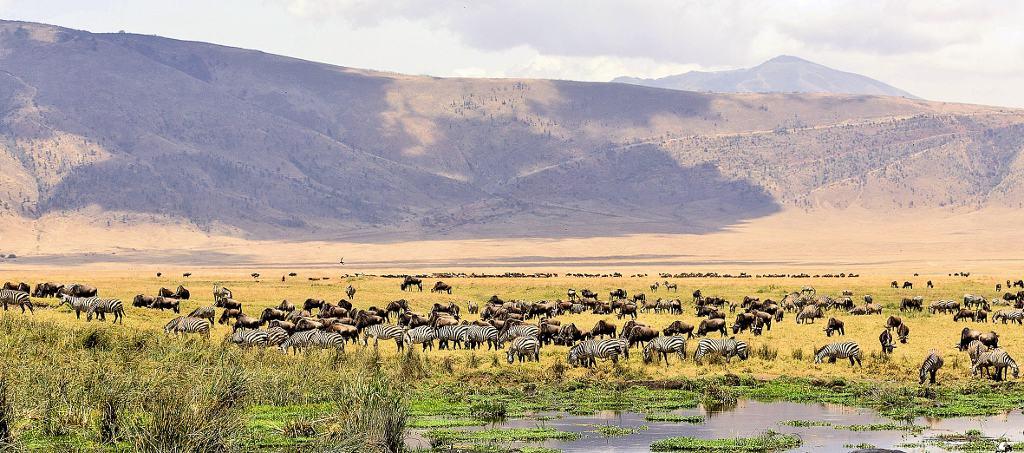 06-01 Ngorongoro Crater - not our photo (1024x453)