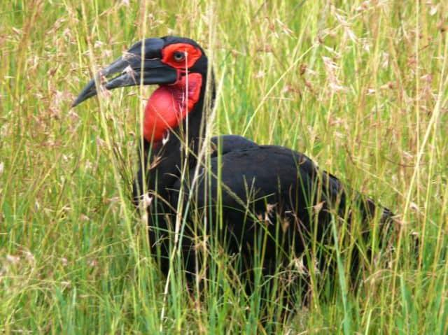 Masai Mara Highlights #2: Photo Gallery