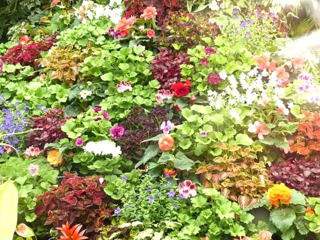 Flowering In Victoria