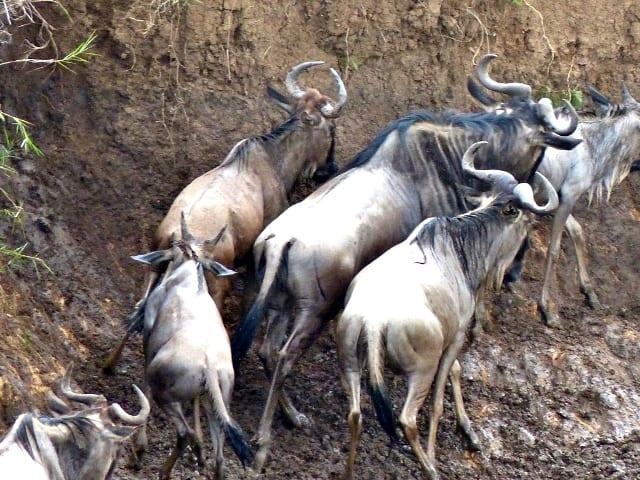 Masai Mara Highlights #3: Photo Gallery
