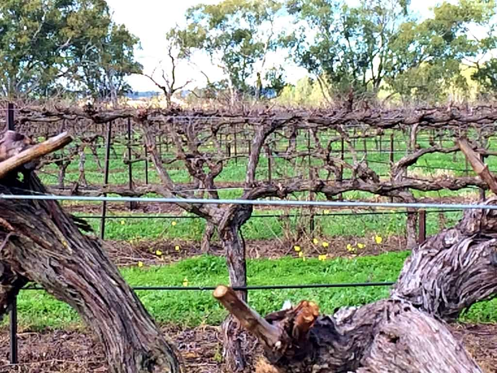 Adelaide'S Vine-Smothered Valleys
