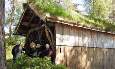 Norwegian Fjords #1: Eidfjord & Alesund